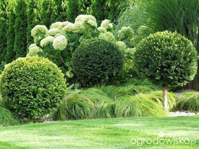 Organic Gardening In Pots