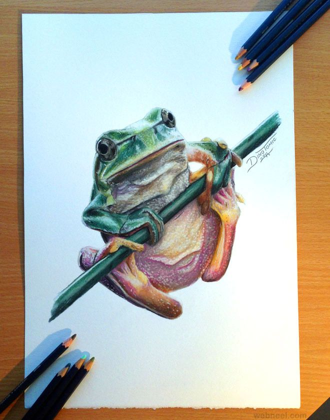 25 Beautiful and Realistic Animal Drawings around the ...