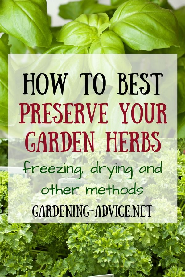 Want to preserve your herbs for later use in the winter months? Gardening Advice.net shares how to freeze, dry and marinate herbs, as well as which herbs are best suited for each method.