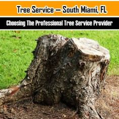 Caring for the trees around your home.