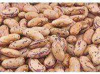 Rostlina | Phaseolus vulgaris, Fazol obecný