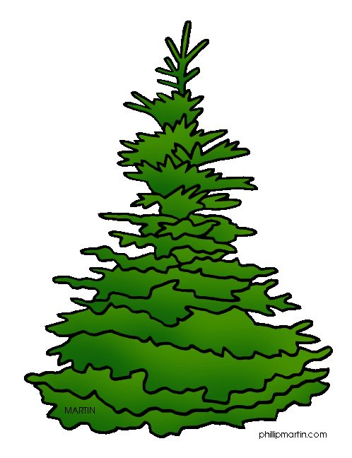 Black Hills Spruce Christmas Tree
