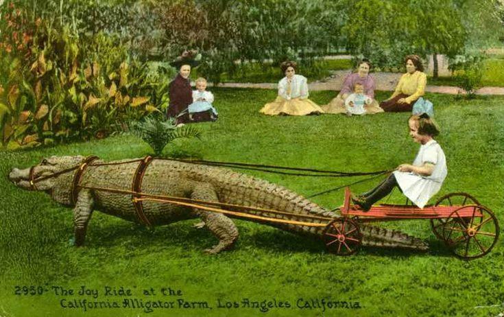 Alligator Cart!