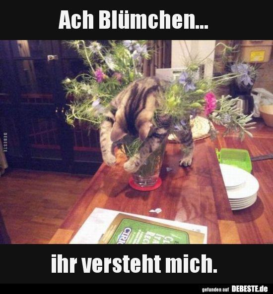 Ach Blümchen… ihr versteht mich.. | Lustige Bilder, Sprüche, Witze, echt lus… – vicky