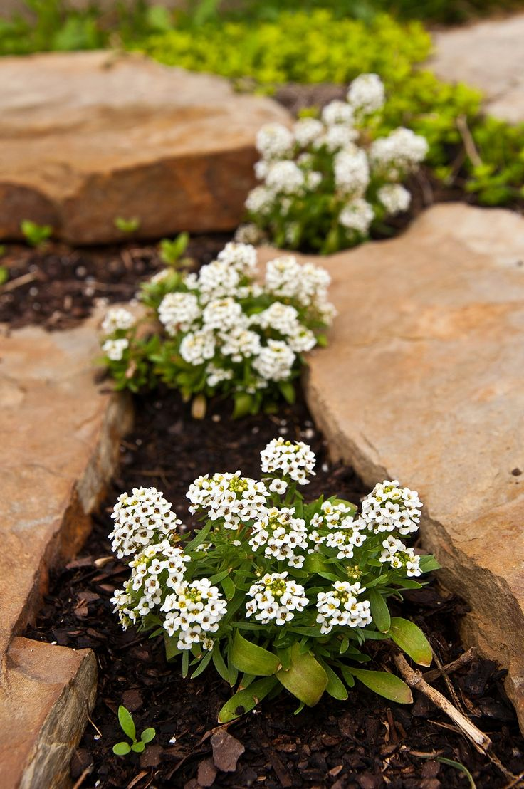22 best shade plants and ground cover images on Pinterest Shade