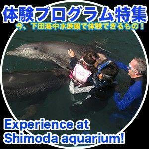 イルカとの触れ合いプログラムが充実している