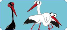 Stork Family Album, quiz