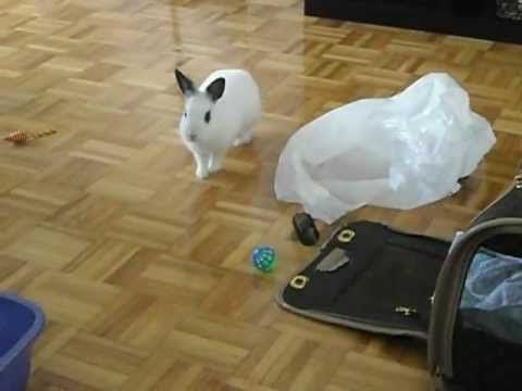 Lily the Rabbit checks out Kitten's stuff