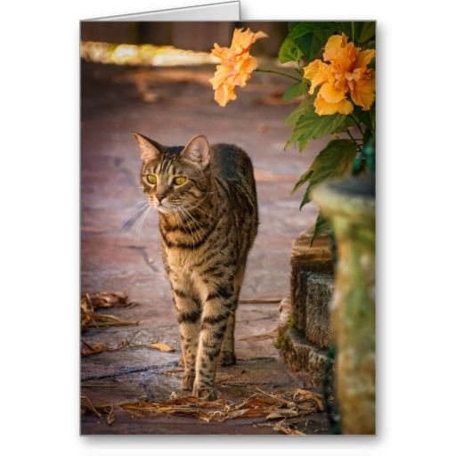 21 best zee zoeys zazzle boutique for cat lovers images on a cat and autumn leaves to celebrate thanksgiving card thanksgiving greeting cardsautumn leavesboutiquecat m4hsunfo Gallery