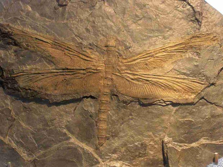 Best 25 Dragonfly Images Ideas On Pinterest Dandelion