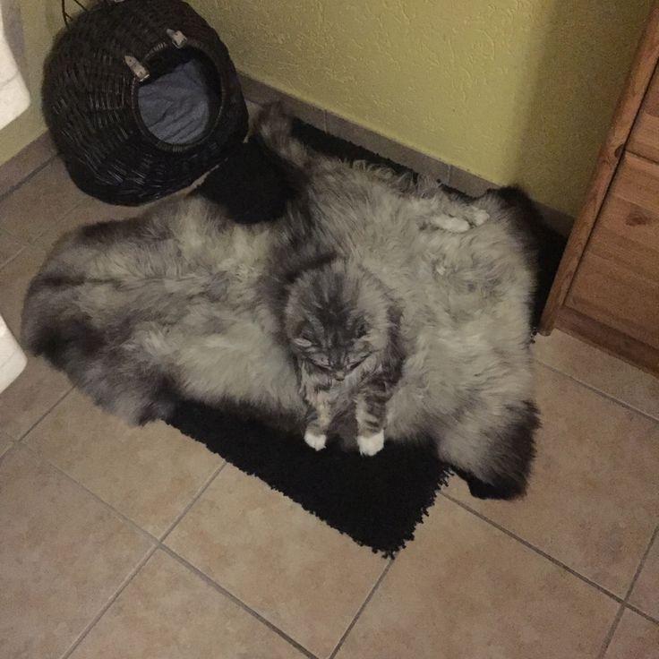 Katze gesucht 😏