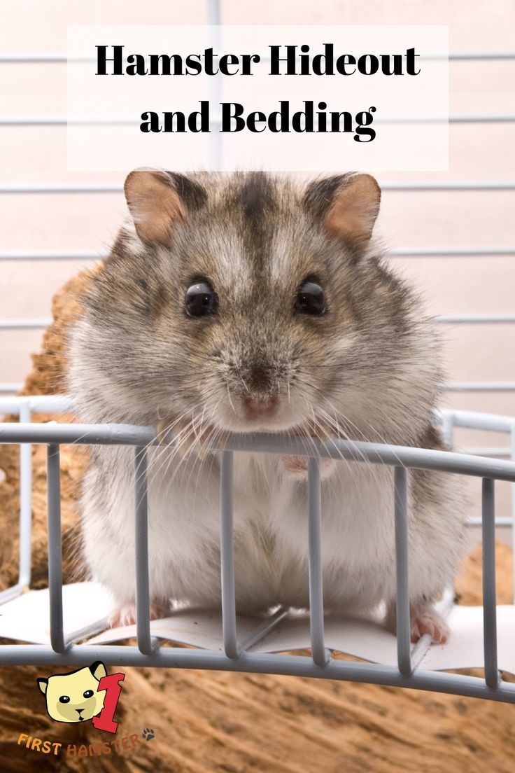 Bedding And Hideout For Your Hamster Care And Cleaning