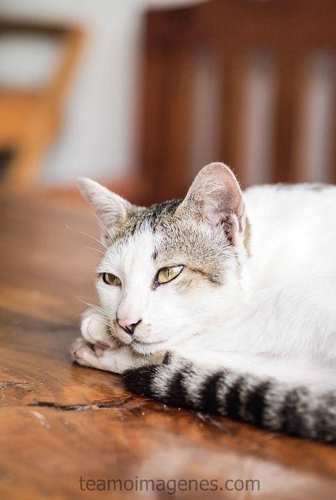 gatitos tiernos y bellas frases de amor