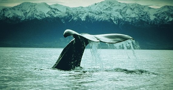 Valar, Kaikoura, Nya Zeeland