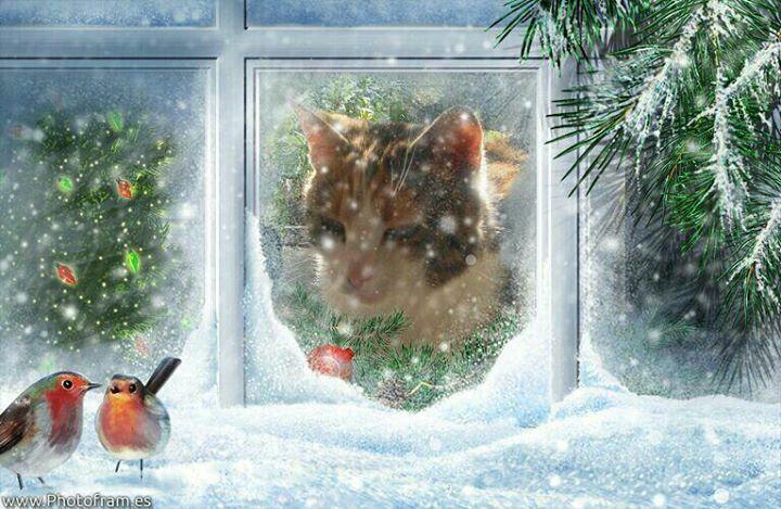 #christmas #snow #cat