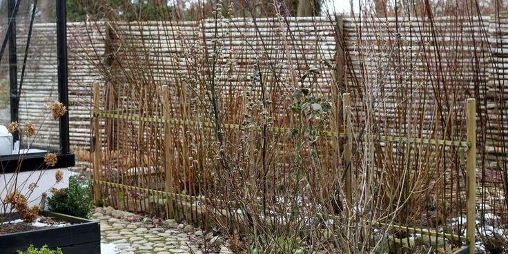 HØST AF PIL - Willow-harvesting