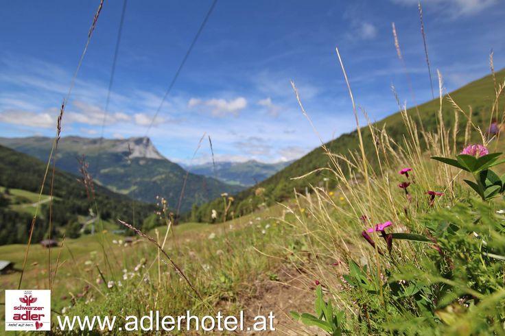 Bergblumen und Blüten sind wahre Highlights auf den Bergwiesen