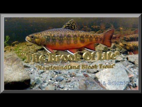 My favorite fishing and fish documentaries...