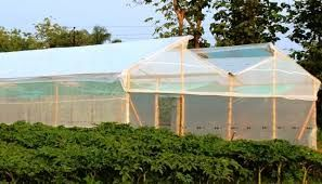 Image result for bamboo greenhouse