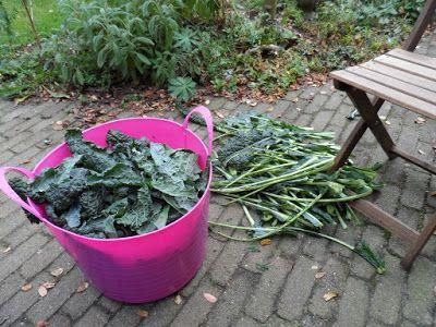 Dorthy's moestuin en meer: Palmkool oogsten en appels drogen