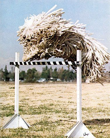 that is a dog!!! the breed is called komondor.