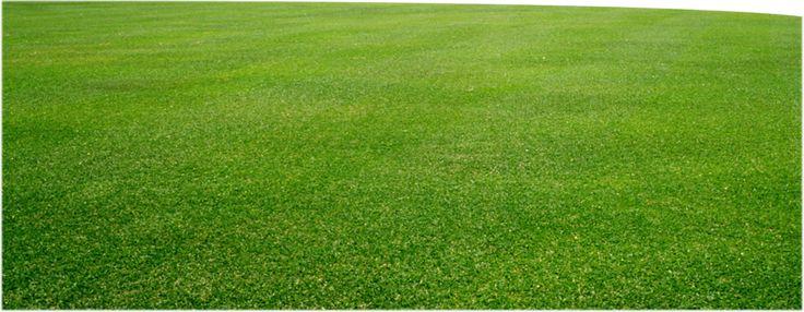 İSADAMİ Doğadan naturel çimen çayır png Resimleri , Yeşil çayır çimen arkafon transparna resimleri, çok güzel yeşil çimenlik resimleri, yeni eklenen çok güzel çimenlik çayır resimleri, yeni güze