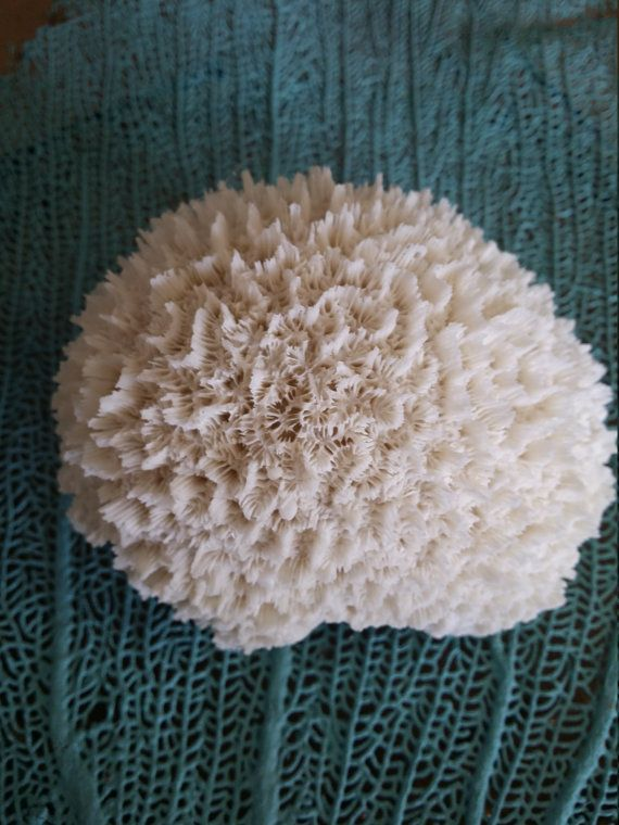 Beautiful faux brain coral, budget friendly & eco friendly option to coastal decorating. Each resin coral is approx 3x4 and is perfect for wedding displays, centerpieces, creating DIY home arrangements with a coastal flare.