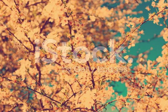 Vintage Blossom and Sky royalty-free stock photo
