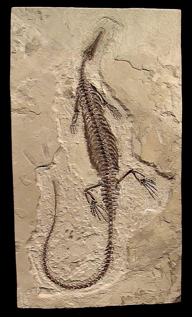 Fosil