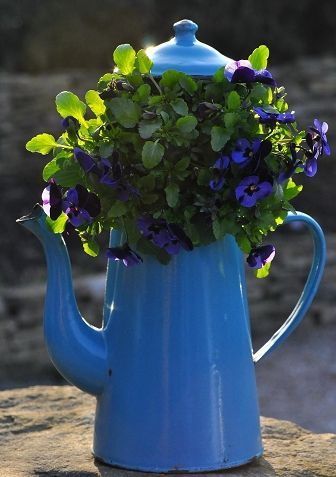 <3 old enamelware coffee pot | floral http://paysdemerveille.canalblog.com | USING THINGS WE HAVE | n.b. - Bring indoors and buy seasonal potted plants for it. Nice on the kitchen table.