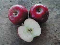 Dwarf Apple Jonathan: Malus domestica 'Jonathan'. Will pollinate other apples.Fruit, Apples Jonathan, Dwarfs Apples, Domestica Jonathan