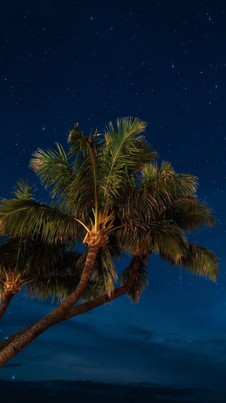 Hd Wallpapers Nature Palms Night Starry Sky