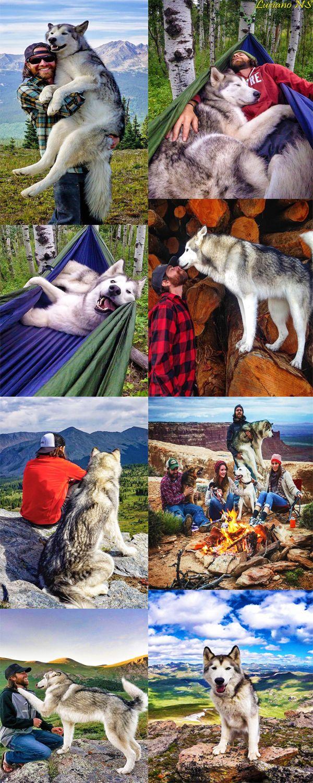 The amazing life of Loki, the wolf dog and his human family.  https://web.facebook.com/lokithewolfdog