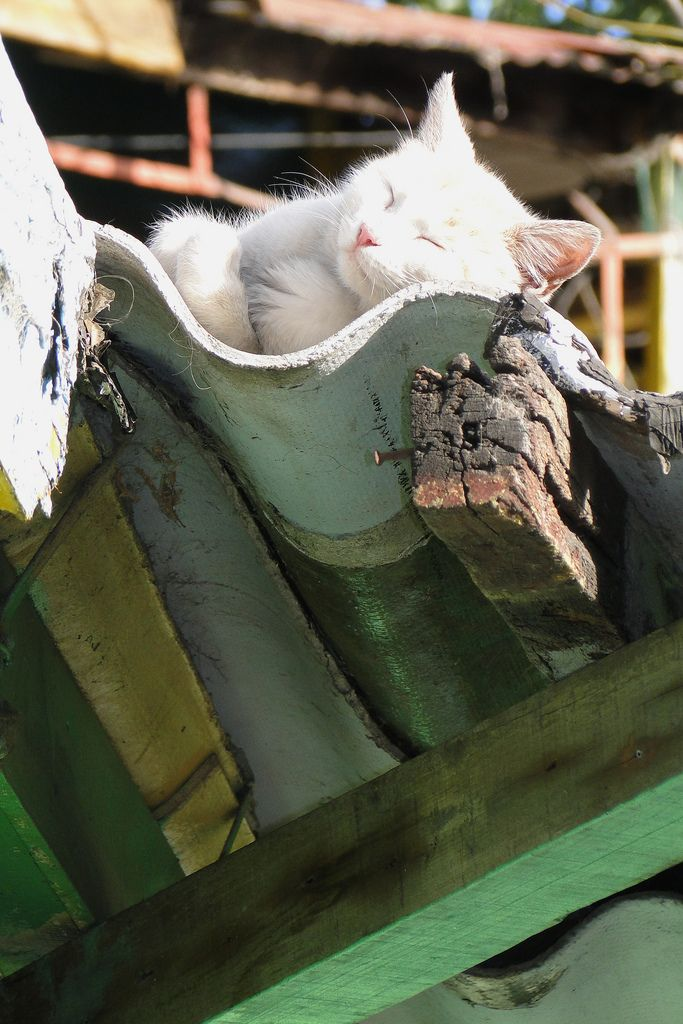 "magicalnaturetour: ""Cat Takes a Snooze on a Rooftop - La Boca - Buenos Aires - Argentina (by Adam Jones,"