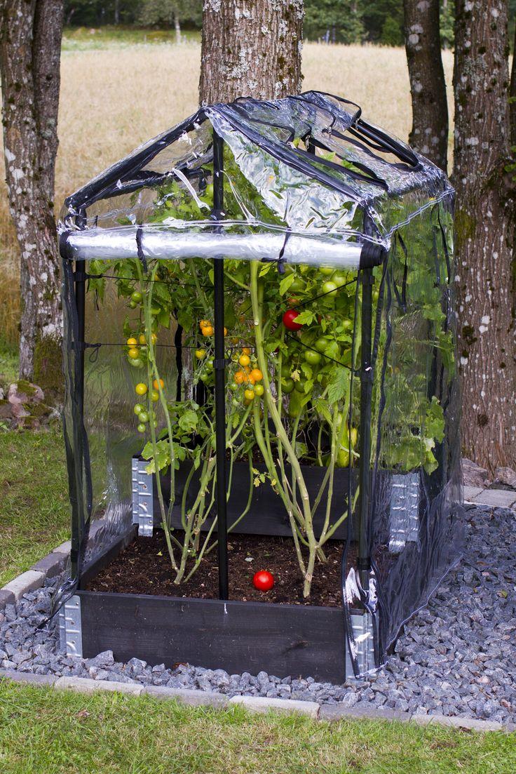 miniväxthus till pallkrage