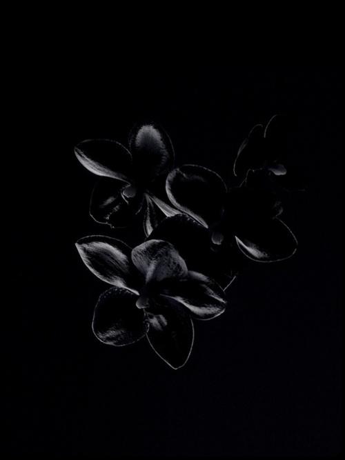 | FLORAL DESIGN | #BlackOrchid.  Mystique and Sophistication