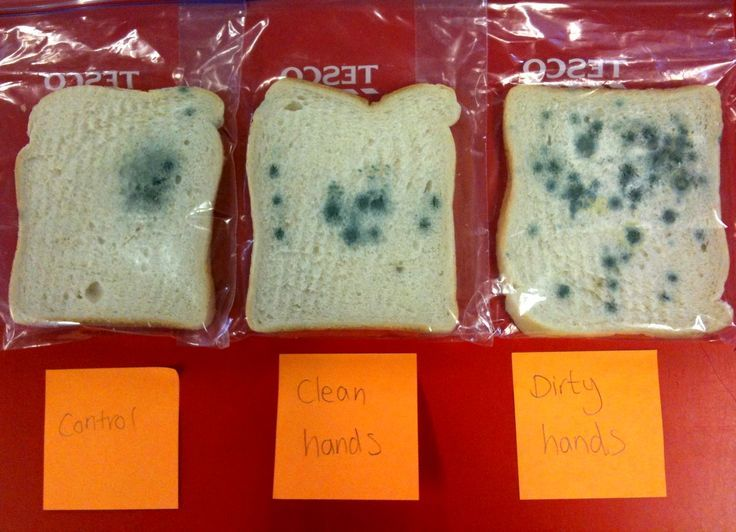 Clean vs. dirty hands bread experiment - what a great way to demonstrate the importance of proper hand washing. Would love to see what happens when you wash hands with warm soapy water versus hand sanitizer!