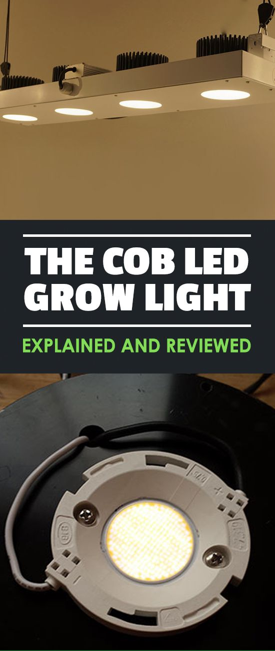 Have you heard about COB LED grow lights and want to know what the fuss is about? Look no further - this guide to COB LEDs is everything you need.