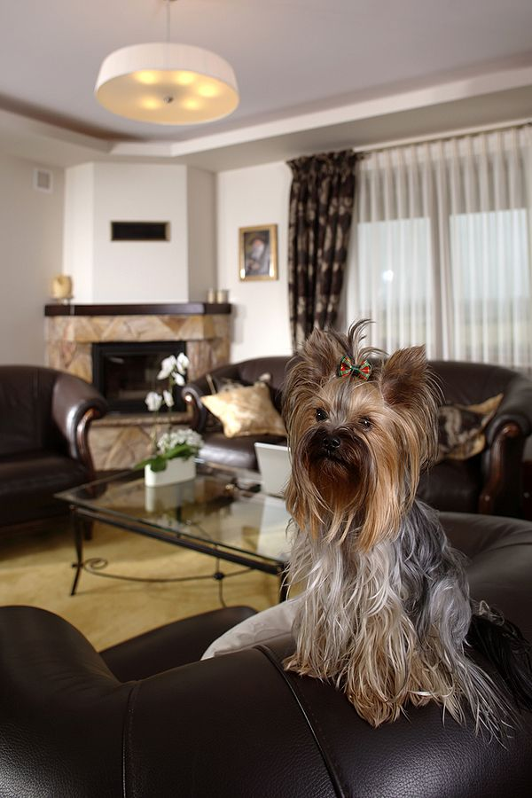 The 10 Best Apartment Dog Breeds: Why Size Doesn't Matter | Dogster