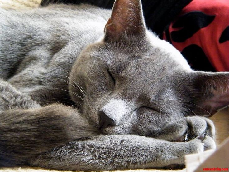 It Was A Lazy Sunday Afternoon. - http://cutecatshq.com/cats/it-was-a-lazy-sunday-afternoon/