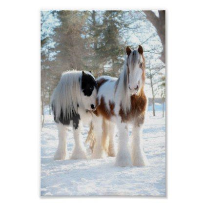 gypsy vanner horses poster - horse animal horses riding freedom