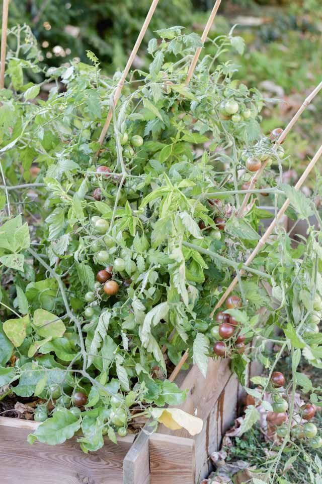Jardinage bilan de récolte dans mon potager urbain