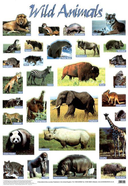 Wild Animals Poster     #Animals #Wildlife #Science #Education #Classroom