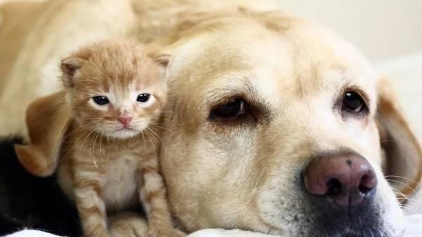Pulgas y nuestras mascotas: remedios naturales