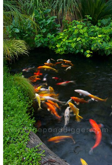 109 best japanese koi ponds images on pinterest japanese for Building a goldfish pond