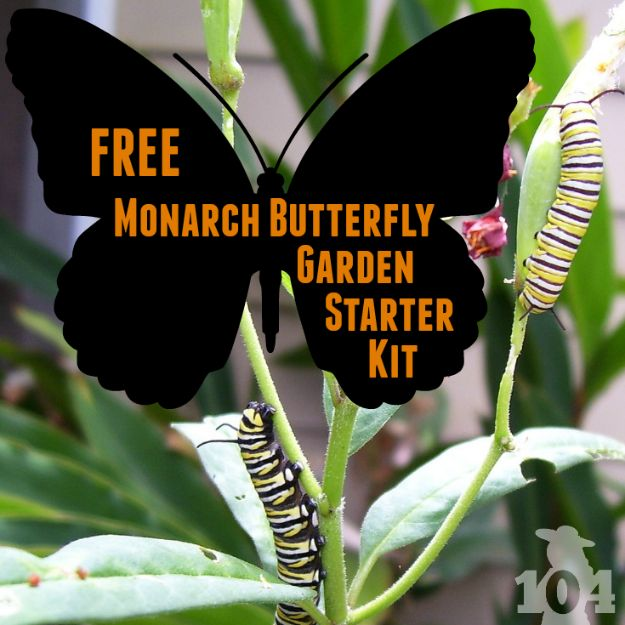 The NWF is offering a free Monarch butterfly garden starter kit to anyone who takes the pledge to help protect and restore the Monarch butterfly population.