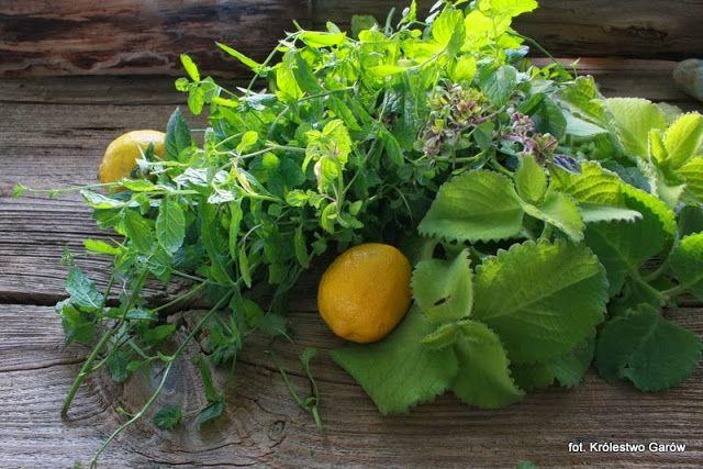 Blog o gotowaniu - tradycyjna kuchnia: Syrop miętowy