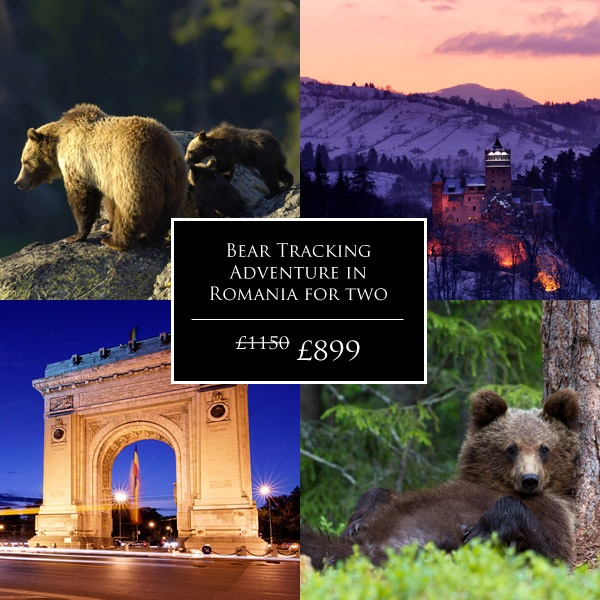Our most EPIC getaway deal yet! Track down bears in the wild, explore the vibrant city of Bucharest AND visit the eerie 'Dracula's Castle' – 22% off for a limited time only