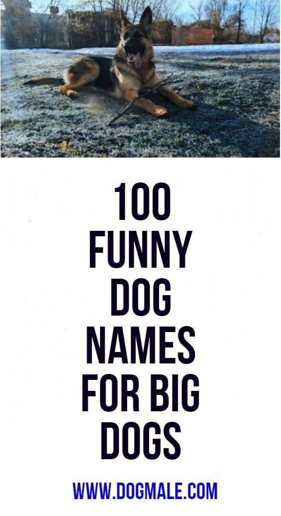 100 Funny Dog Names For Big Dogs Funny Dog Names Big Dog Names