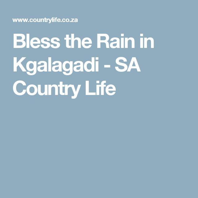 Bless the Rain in Kgalagadi - SA Country Life